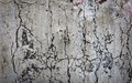 Grunge wall texture Stock Photo