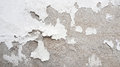 Grunge white and grey cement wall texture background. Royalty Free Stock Photo