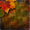 Grungy autumn background with maple leaves and space for text o photo Royalty Free Stock Images