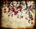 Grungy cherry blossoms Stock Photo