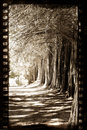 Grungy film with trees Royalty Free Stock Photo