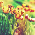 Grungy floral backgrounds. Royalty Free Stock Photo