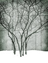 Grungy image of winter park with trees Royalty Free Stock Photo