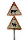 Grungy UK Cattle Warning Sign Royalty Free Stock Photo