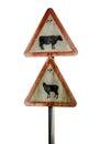 Grungy UK Cattle Warning Sign Royalty Free Stock Photo