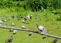 Grupa gołębie Obrazy Stock