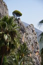 Guadalest pino alicante spain lone pine on the top of a rock Stock Images