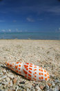 Guam beach seashell Royalty Free Stock Photo