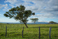 Guanacaste trees on flat farmland a classic northern costa rica landscape Royalty Free Stock Image