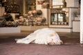 The guard dog Royalty Free Stock Photo