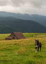 Guarding dog image of a common race near a mountain cabin Stock Photos