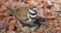Guarding those nest eggs
