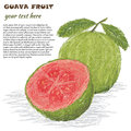 Guava fruit Stock Photo