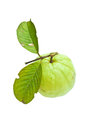 Guava with leaf Royalty Free Stock Photo