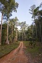 Guiana path forest in french Stock Photography