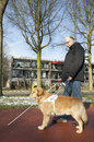 Guide dog is helping a blind man Royalty Free Stock Photo