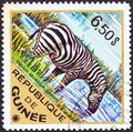GUINEA - CIRCA 1975: A stamp printed in Guinea from the `Wild Animals` issue shows a Grant`s Zebra Equus quagga granti Royalty Free Stock Photo