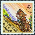 GUINEA - CIRCA 1975: A stamp printed in Guinea from the `Wild Animals` issue shows a Leopard Panthera pardus, circa 1975. Royalty Free Stock Photo