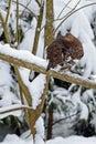 Guinea fowl hoen hoender in parc bavaria Stock Photography