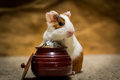 Guinea pig fortune small modeling with a pot of world coins Stock Photography