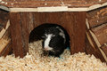 Guinea pig house Royalty Free Stock Photo