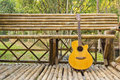 Guitar and Branch Royalty Free Stock Image