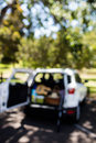Guitar, fishing rod, picnic basket in car trunk on a sunny day Royalty Free Stock Photo