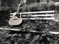 Guitar And Nature
