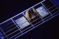 Guitar Pick on Fret-board Royalty Free Stock Photo