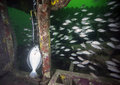 Gulf Flounder Catch Royalty Free Stock Photo