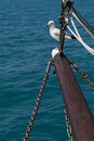 Gull on mast sea sitting a Stock Images
