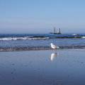 Gull and ship at the beach north sea Stock Photos