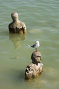 Gull sitting on a head of statue in water seagull Stock Photos