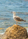 Gull standing on a stone in front of the ocean Stock Photo