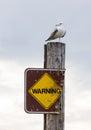 Gull on Warning Sign Stock Image