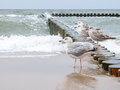 Gulls on the breakwater Royalty Free Stock Photo