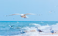 Gulls flying on the beach Royalty Free Stock Photo