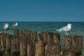 Gulls nice Royalty Free Stock Photo