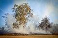 Gum tree bush fire australia in the australian and scrub on Royalty Free Stock Photos