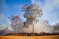 Gum tree bush fire australia in the australian and scrub on Stock Image