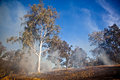 Gum tree bush fire australia in the australian and scrub on Royalty Free Stock Image