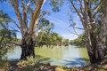 Australian Eucalyptus Gum trees on banks of river with horseshoe bend under blue sky, Murray River, Victoria, Australia 2 Royalty Free Stock Photo