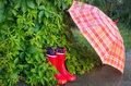 Gumboots and umbrella wet in garden Stock Photos