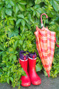 Gumboots and umbrella wet in garden Royalty Free Stock Image