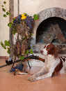 Gun dog near to shot-gun and trophies Royalty Free Stock Image