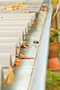 Gutter home maintenance leaves in rain Stock Image
