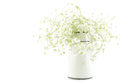 Gypsophila (Baby's-breath flowers), light, airy masses of small white flowers, process high key. Royalty Free Stock Photo