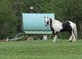 Gypsy Caravan with Horse Royalty Free Stock Photo