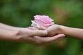 Hände mit einer rose Lizenzfreies Stockfoto