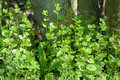 Habitat portrait hedgerow plants uk habitats flora in spring sun Royalty Free Stock Photos